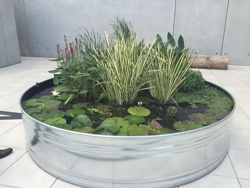 Floating garden at the Whitney Museum