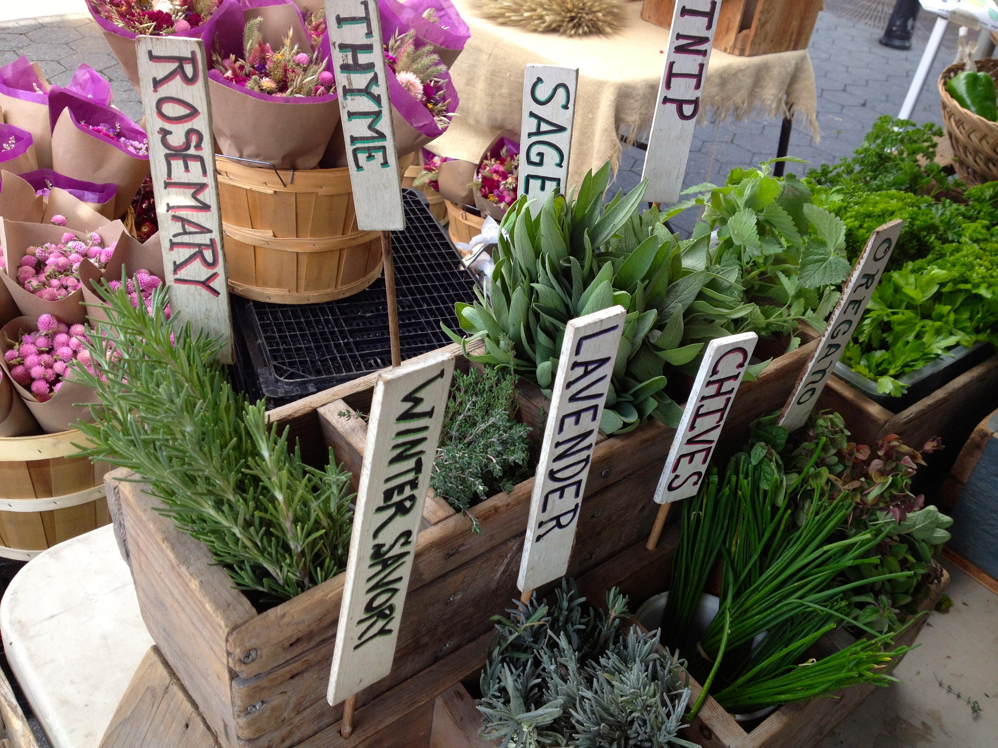 Union Square Greenmarket herbs